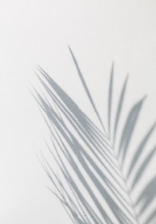 shadow of palm leaves Stockfoto