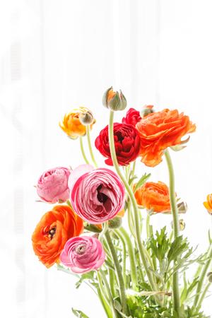 Bunte persische Hahnenfußblumen (Ranunculus) Standard-Bild