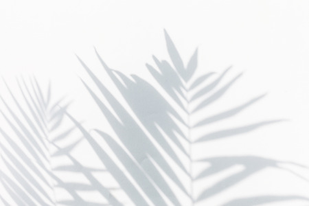 shadow of palm leaves Stock Photo
