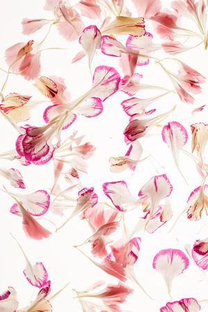 flower petals 版權商用圖片 - 128518855