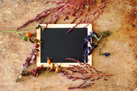 thanksgiving background: plants with empty chalkboard