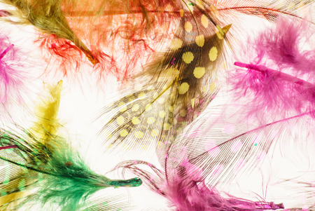 waft: color feathers Stock Photo