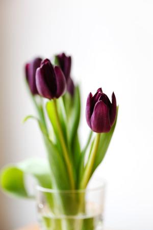 loveliness: nice tulips Stock Photo