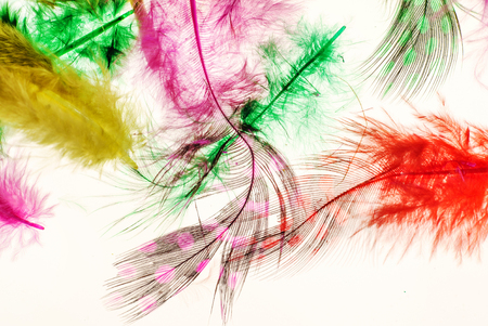 color feathers Stock Photo