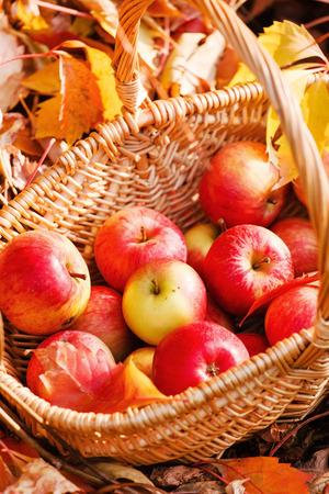 apple basket: apples in basket