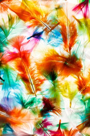 feather: Plumas de colores