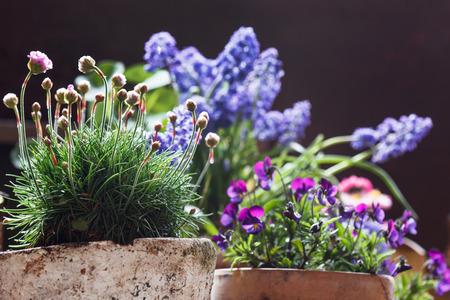flower garden: spring flowers