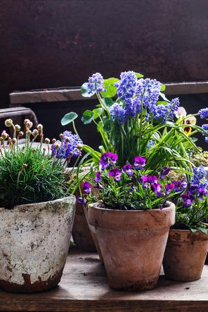 blue flowers: spring flowers