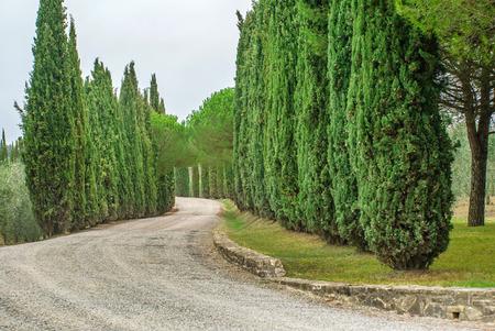 san quirico: country road