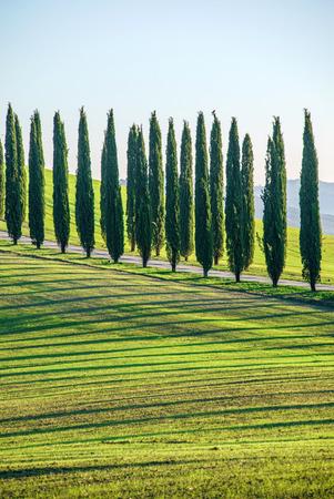 san quirico dorcia: Tuscany landscape Stock Photo
