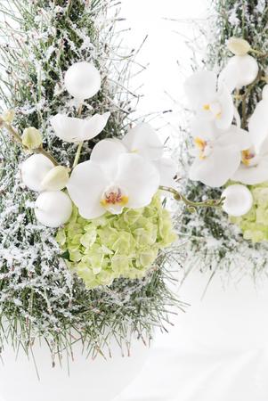 orchid tree: Christmas arrangement Stock Photo