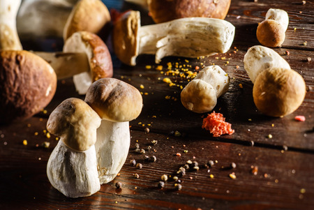 cepe: fresh boletus Stock Photo