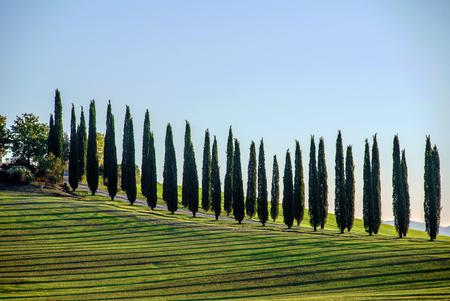 san quirico d'orcia: Tuscany landscape Stock Photo