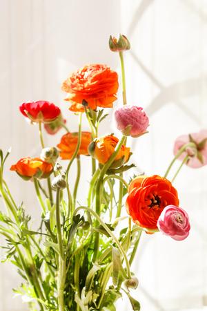 buttercup: Colorful persian buttercup flowers (ranunculus)