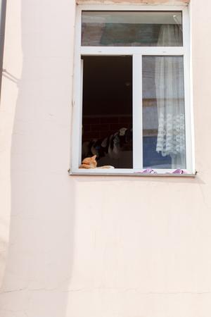 windowsill: Red-haired adult cat lies on a windowsill