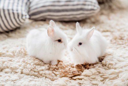 a pair of: pair of white bunny Stock Photo