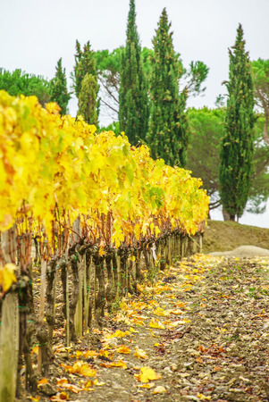 non cultivated: vineyard Stock Photo