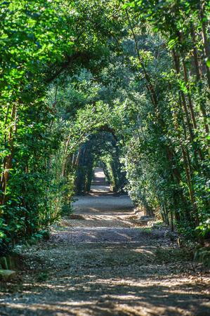 florence italy: Boboli Gardens. Florence Italy