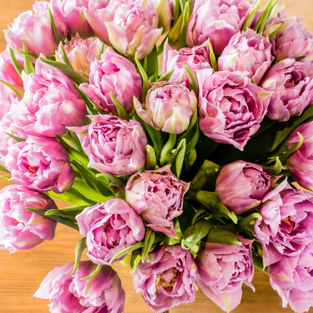 pink tulips: pink tulips Stock Photo