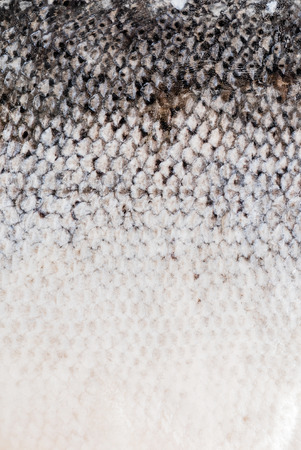 caudal fin: fish skin