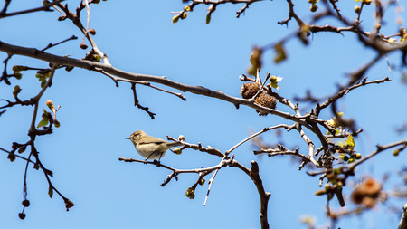 tree dweller: bird on a branch