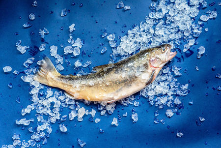 unsaturated fat: fresh fish