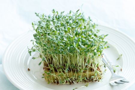 berros: Fresh green watercress  on plate Foto de archivo
