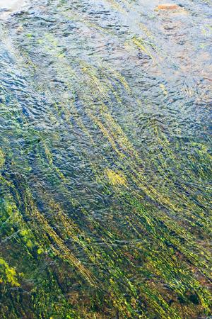algae: algae in river Stock Photo