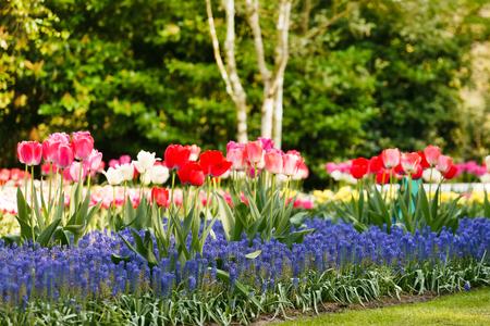 holland landscape: spring garden