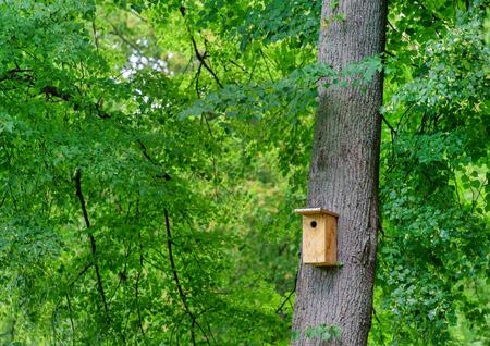 birdhouse in the garde