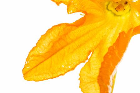 calabacin: flor de calabacín Foto de archivo