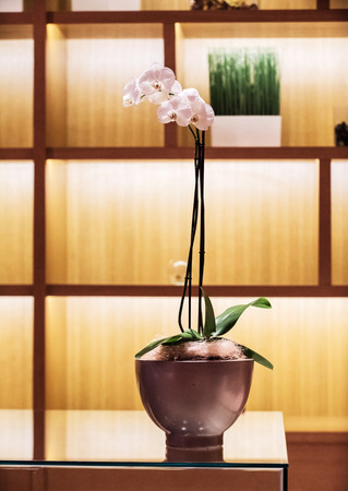 panelled: nice orchid on the pot
