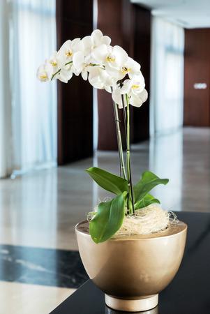 arredamento classico: bella orchidea sul piatto