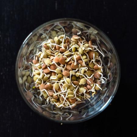 lenteja: semillas germinadas de lentejas