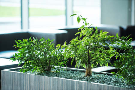 green environment: plants in the office