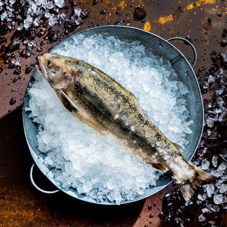 loach: fresh fish
