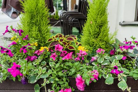 cordyline: flowers outdoor Stock Photo