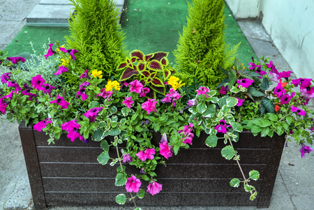 flowers outdoor Stockfoto