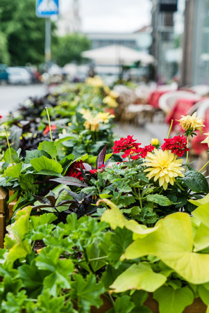 outdoor flowers Stock Photo