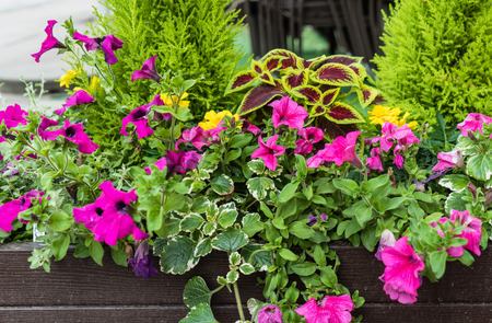 flowers outdoor Stock Photo