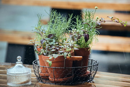 oslo: flowers in pot on a wet cafe table