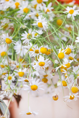 chamomiles: chamomiles bouquet