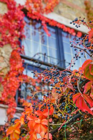 autumn garden: autumn garden Stock Photo