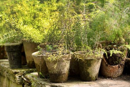 vivarium: potted plants