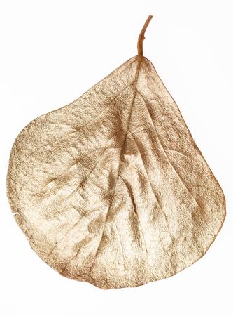 emolument: gold leaf
