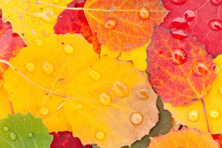 kropla deszczu: autumn leaves