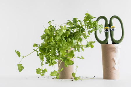 Toilet paper roll recycled as a seedling planters Reklamní fotografie