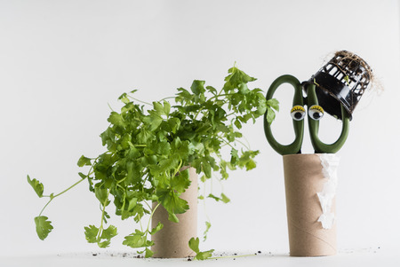 Toilet paper roll recycled as a seedling planters Stock Photo