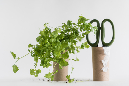 planters: Toilet paper roll recycled as a seedling planters Stock Photo