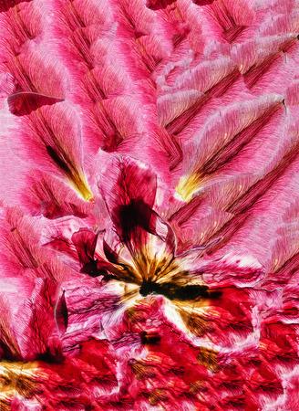 dry tulip
